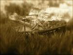 Casier - cimitero delle barche 3