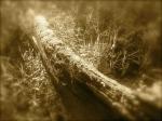 Casier - cimitero delle barche 6