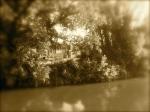 Casier - cimitero delle barche 7